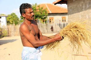 Mr.Veluppillai Sivarasa is a toddy tapper and farmer from Jaffna.