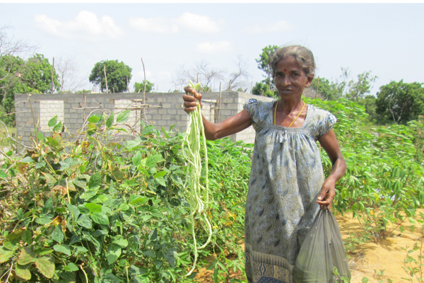 Un Habitat Sri Lanka Introducing Organic Home Gardening To Families In Sri Lanka S Northern Province